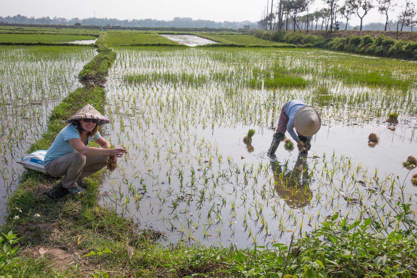 Julie in the Rice Fields