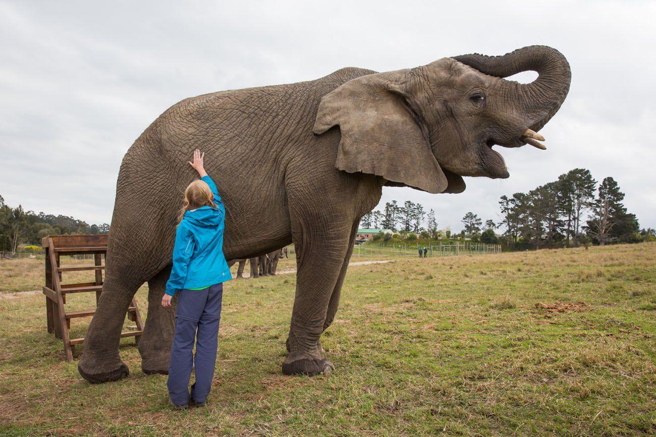 Kara and the Elephant