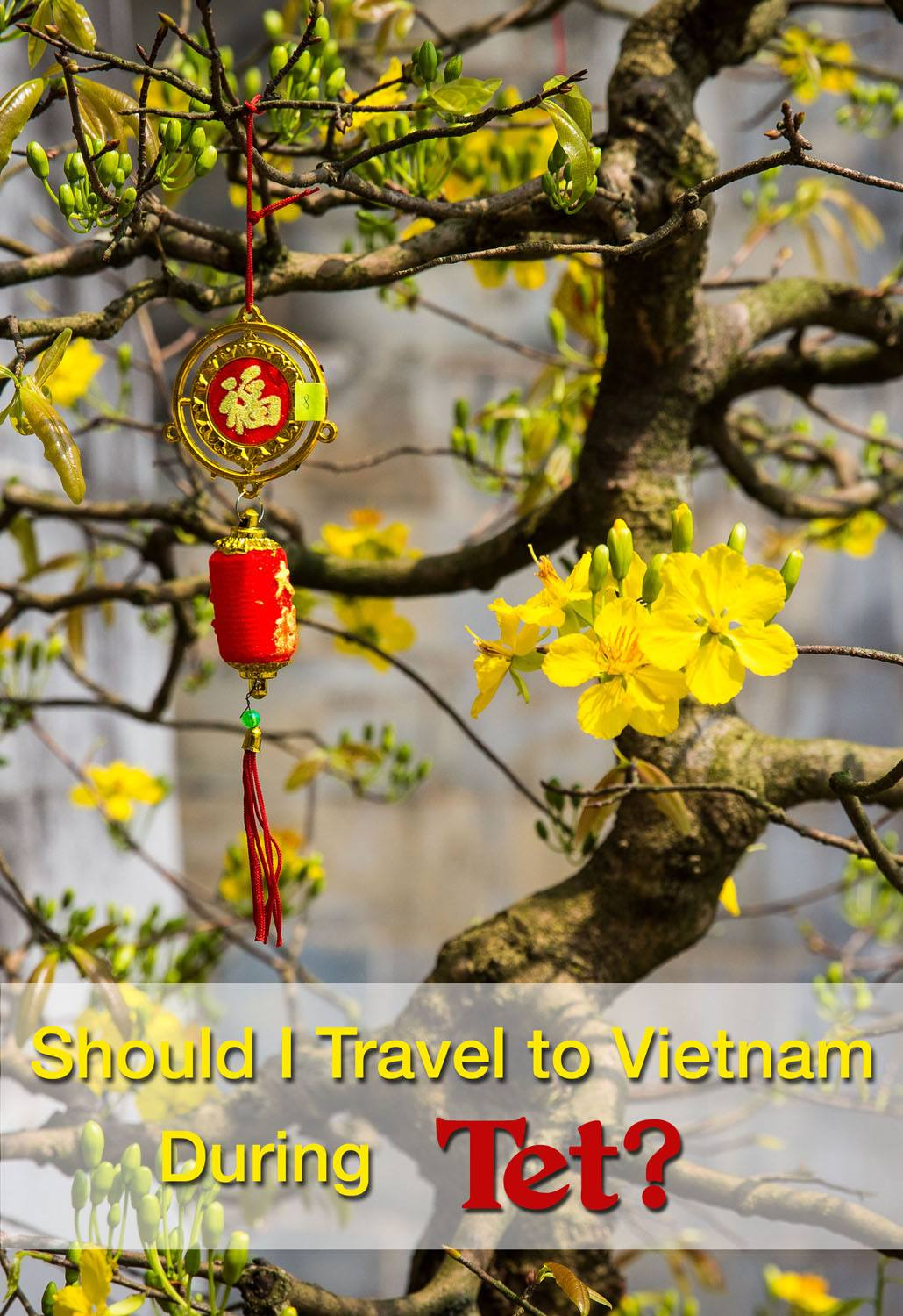Should I Travel to Vietnam During Tet