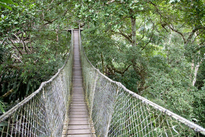 Tree Top Canopy Bridge Amazon Rainforest