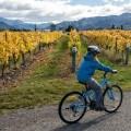 Cycling Marlborough Wine Region