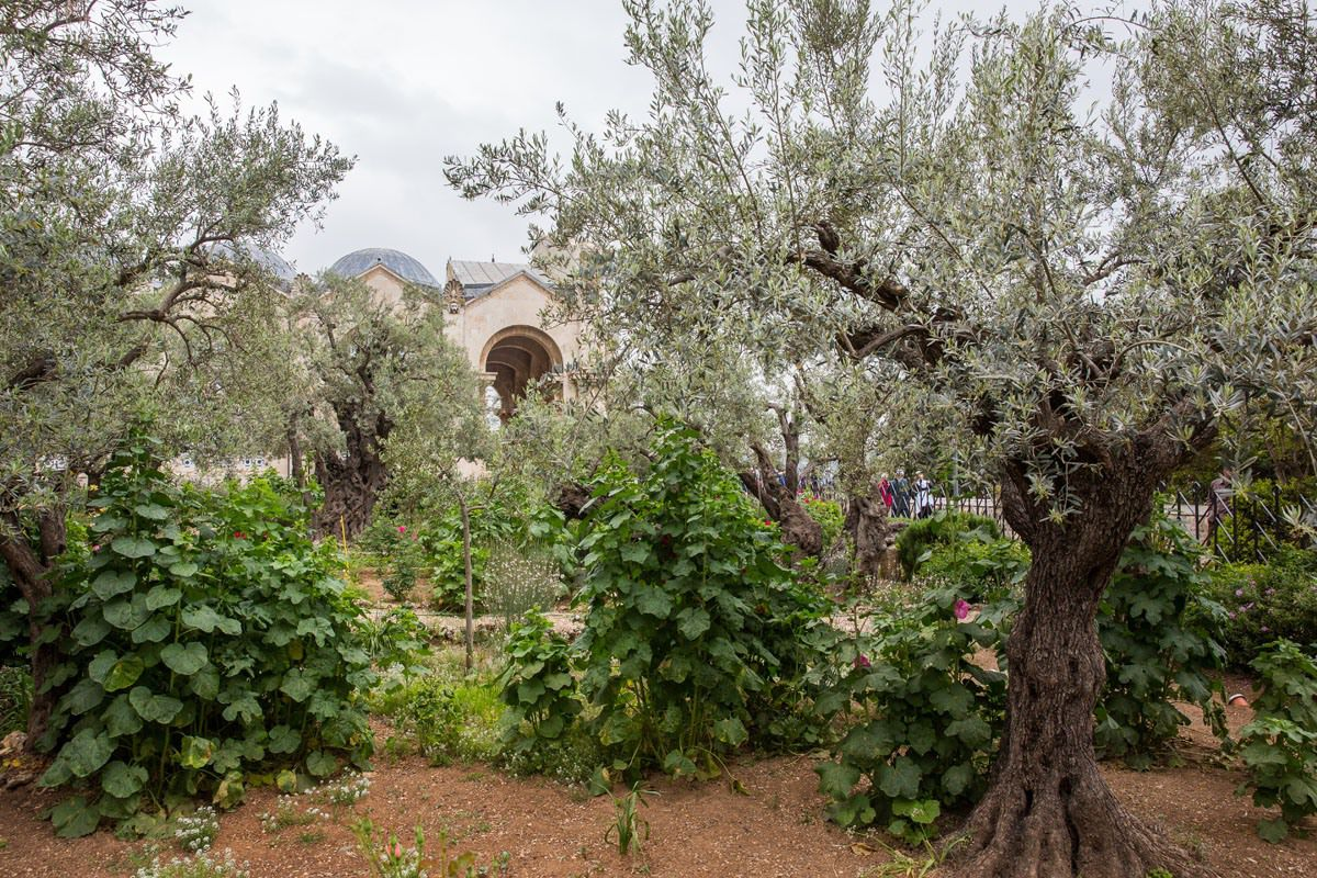 Garden of Gethsemane Best things to do in Jerusalem