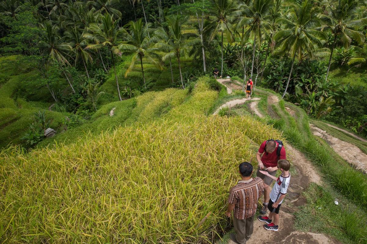 Tegallalang Rice