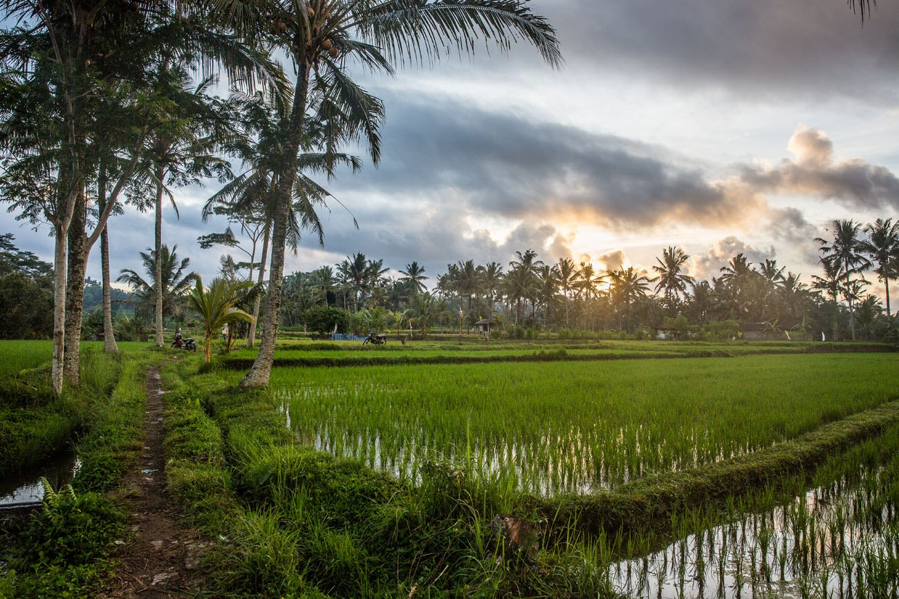Ubud rice fields sunrise