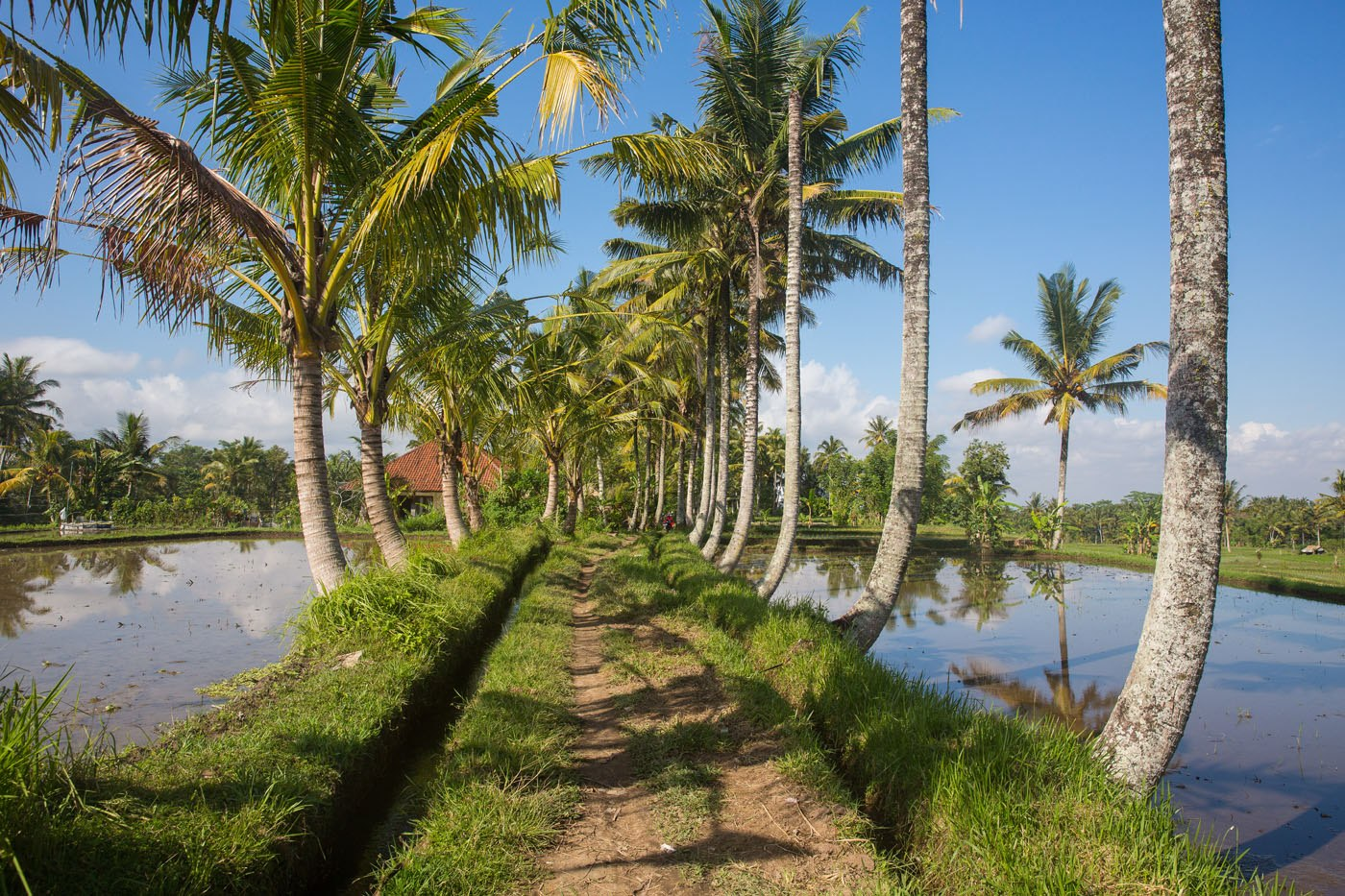 Walking rice fields Bali
