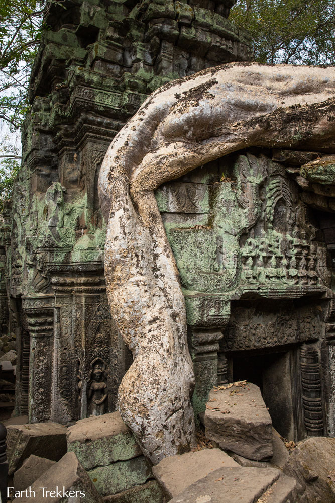 Ta Phrom tree root