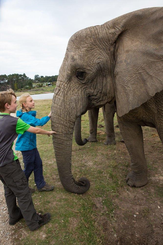 Meeting an African Elephant