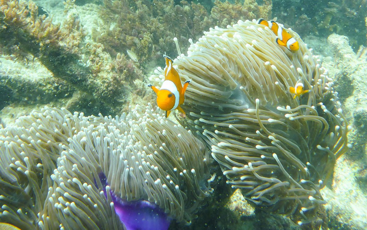 Snorkeling Krabi