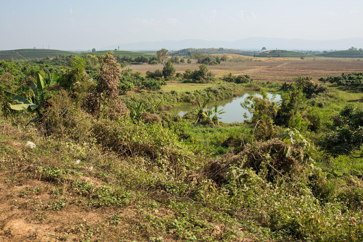 Thai Farmland