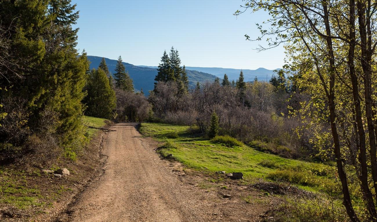 Barneys Trail