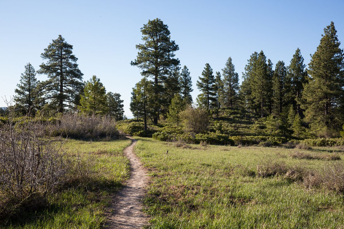 Plateau on the West Rim Trail