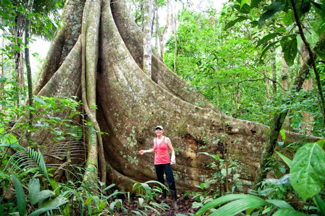 Central Suriname Nature Reserve, Suriname tropical forest