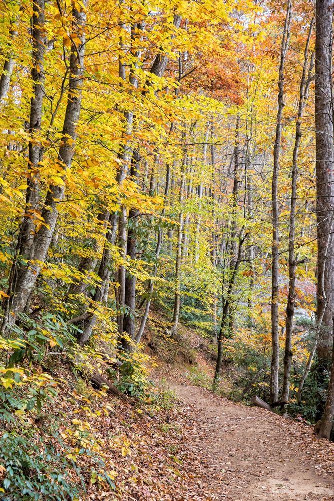 Hiking Asheville