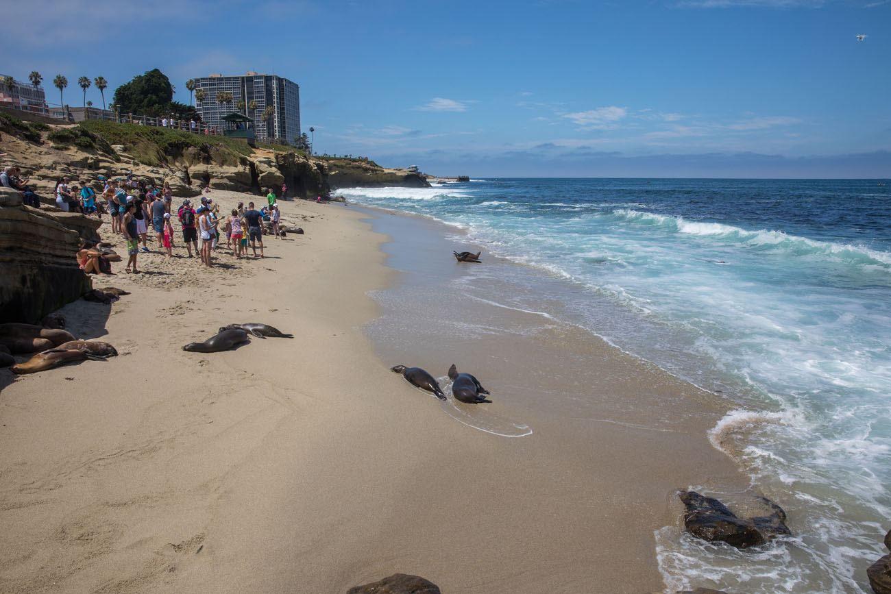 La Jolla Seals best things to do in San Diego