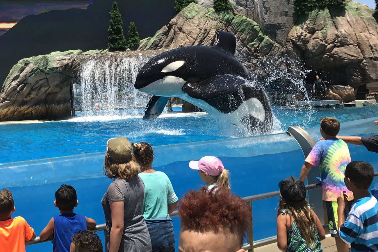 Orca best things to do in San Diego