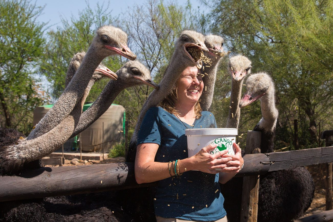 Julie and Ostriches