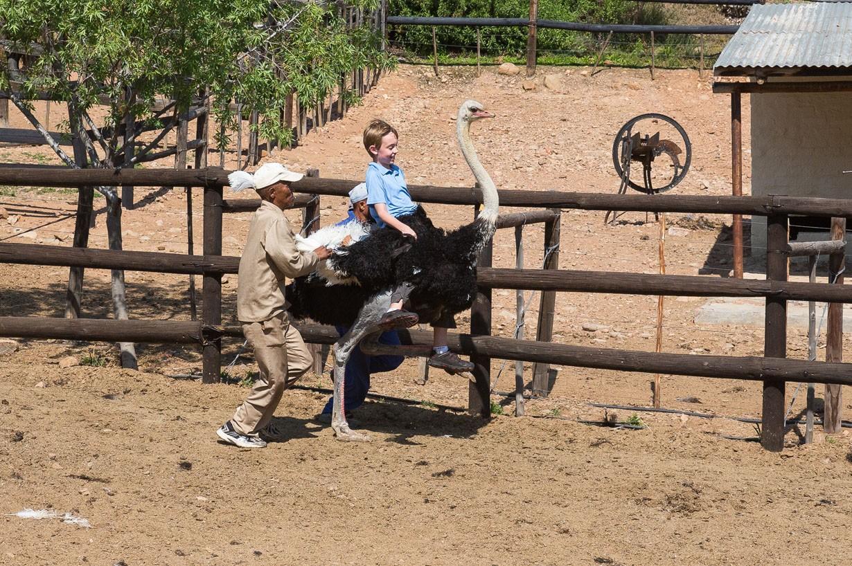 Tyler Riding Ostrich