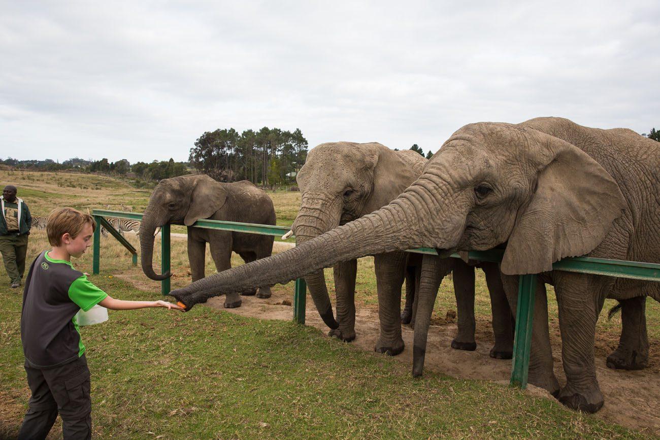 Tyler feeding elephant