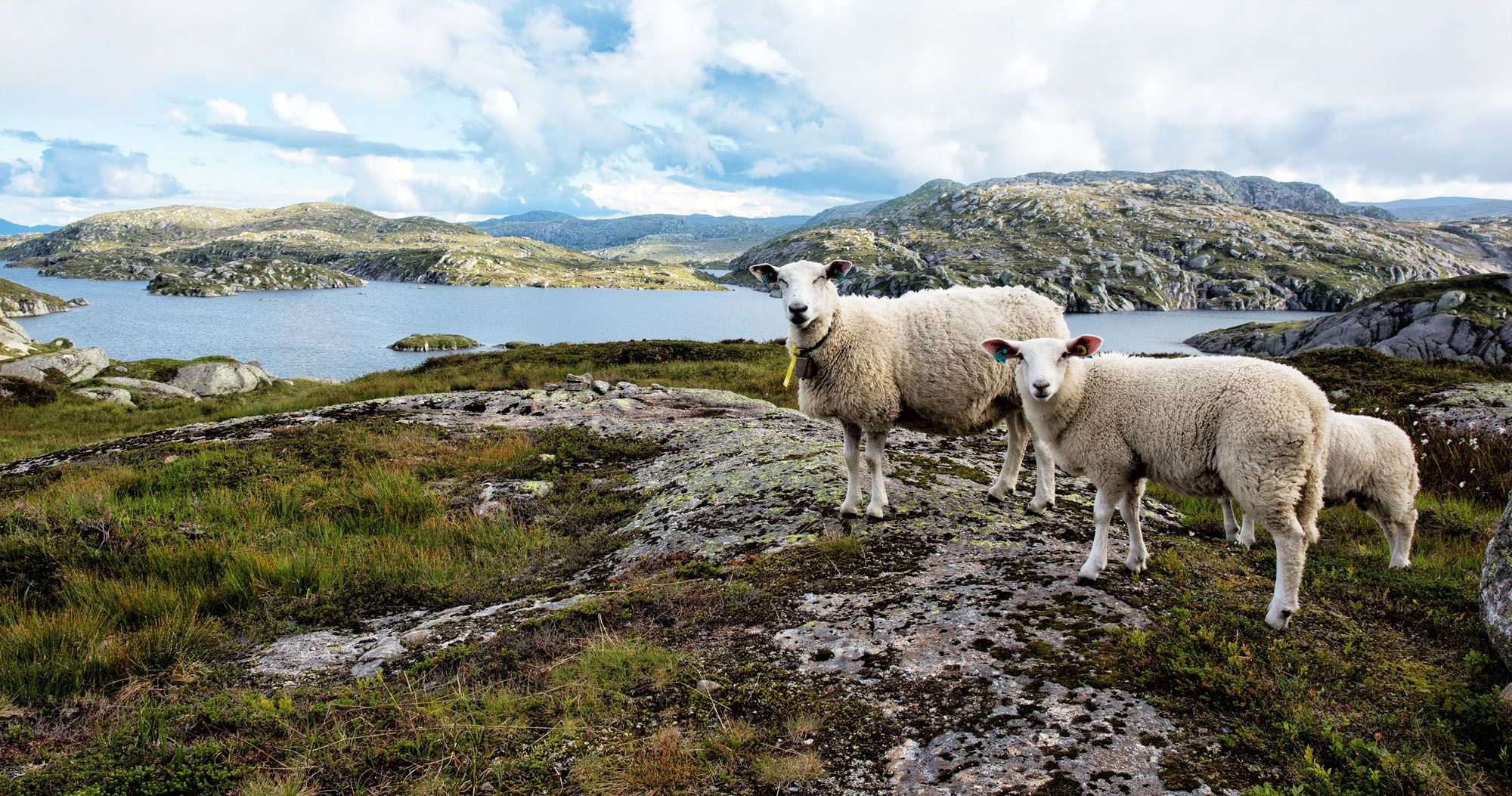 10 Days in Norway Itinerary