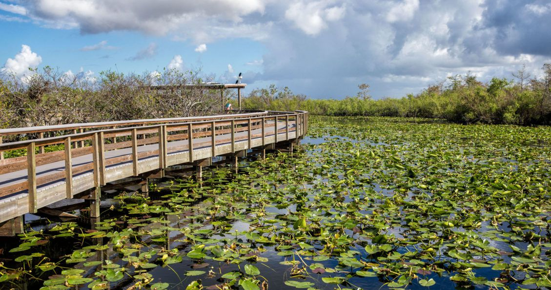 One Day in the Everglades