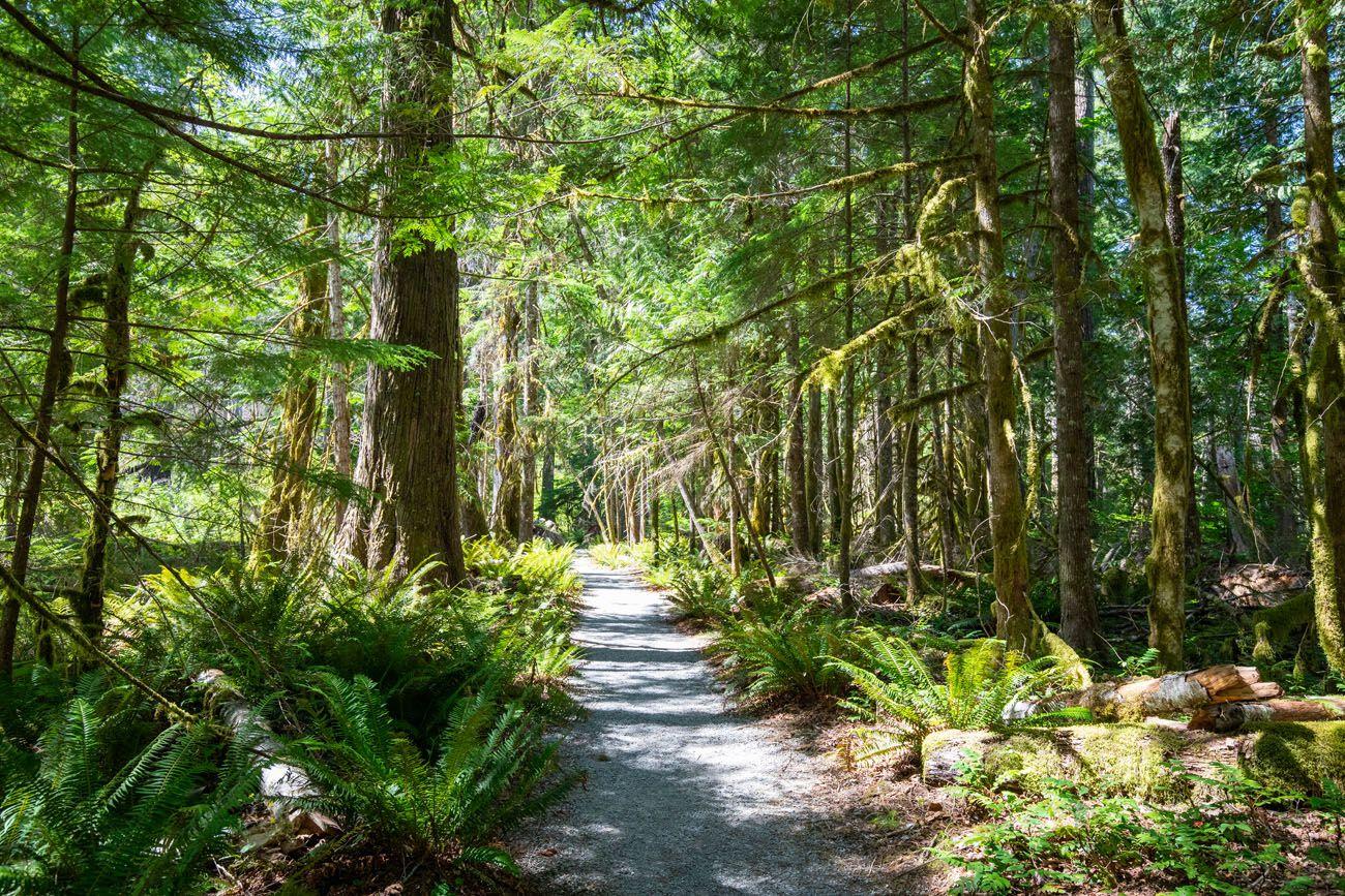 Cedars Washington itinerary