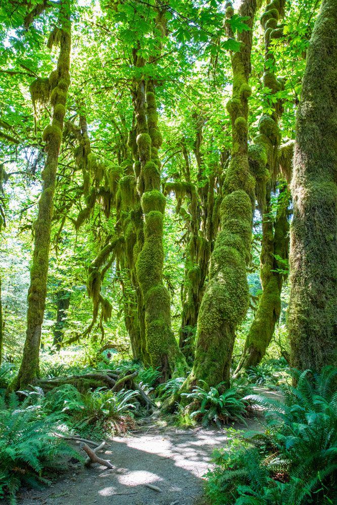 Hall of Mosses Washington national parks