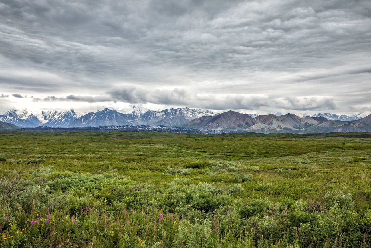 Alaska Range with Clouds things to do on Denali Park Road