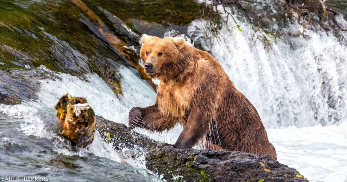 Best Things to Do in Katmai