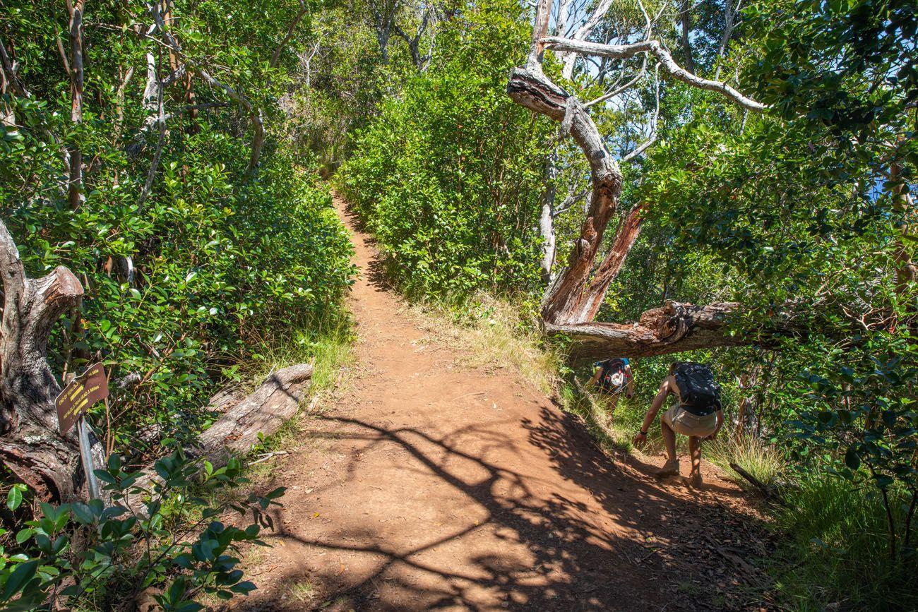 Nualolo Cliff Trail Start